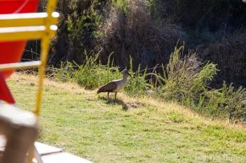 Vogel vor Hennhous