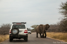 Elefant on the road