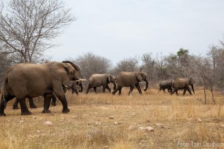 Elefanten nach dem baden