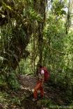 NationalparkYanachaga Chemillén Nebelwald Lianen