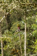 NationalparkYanachaga Chemillén Nebelwald coole Frucht