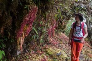 NationalparkYanachaga Chemillén Nebelwald