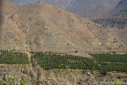 Citrusanbau in Trockengebiet nahe Küste